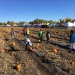 Choosing our pumpkins