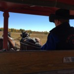 Riding in a wagon pulled by 2 Clydesdales